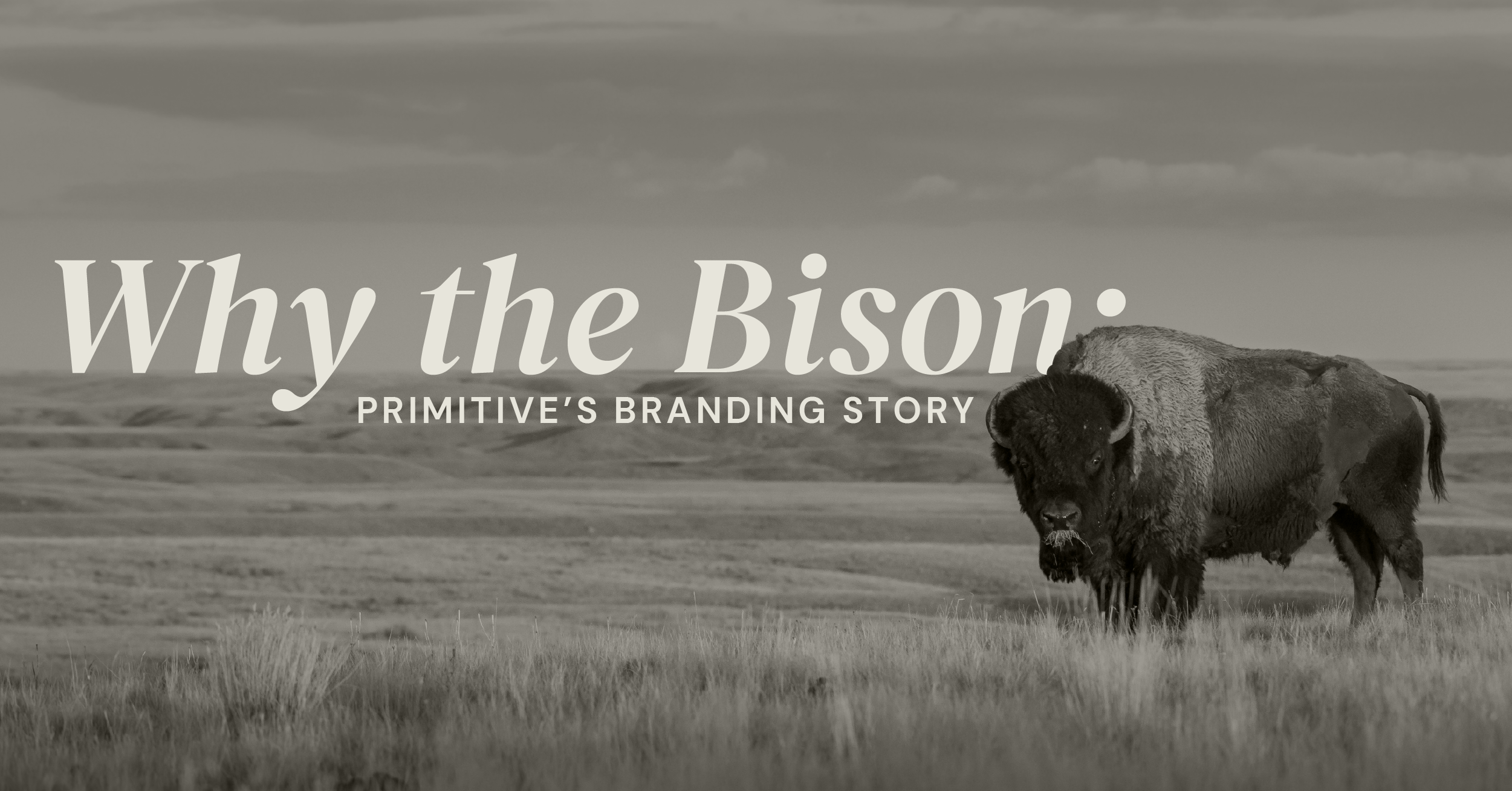 why the bison